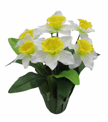 Blooming Spring 16'' Potted Daffodil-Yellow & White