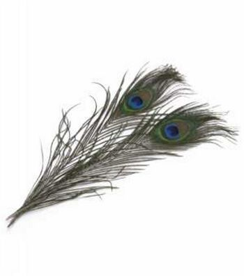 Zucker Feather Peacock Feathers