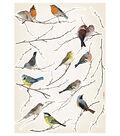 Komar Birds Wall Decal, 15 Piece Set