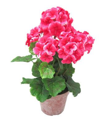 Fresh Picked Spring 18'' Geranium in Pot-Pink