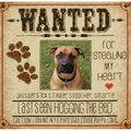 Dog Wanted Counted Cross Stitch Kit-8\u0022X8\u0022 14 Count
