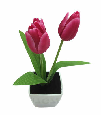 Fresh Picked Spring 10'' Tulip in Container-Hot Pink