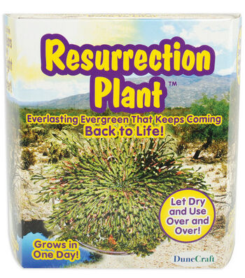 Fast-Acting Plants-Resurrection Plant
