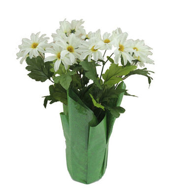 Blooming Spring 12'' Potted Daisy-White