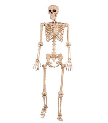 The Boneyard Halloween 60'' Posable Skeleton