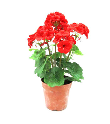 Fresh Picked Spring 18'' Geranium in Pot-Red