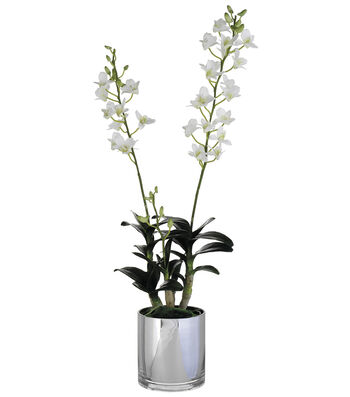 Bloom Room Luxe 30'' Dendrobium Orchid Plant In Glass Vase-White