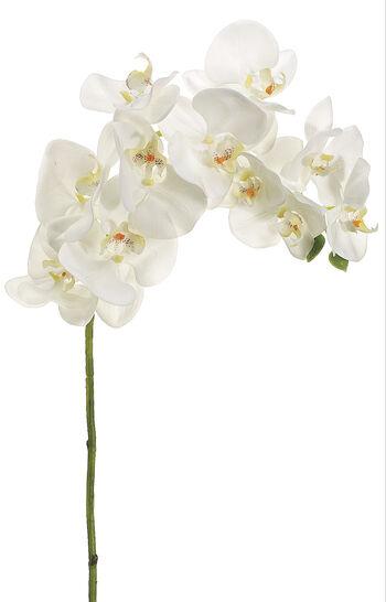 """Bloom Room 37"""" Phalaenopsis Orchid Stem-Cream"""