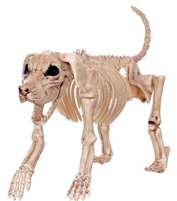 The Boneyard Halloween Skeleton Beagle Dog