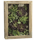 Bloom Room Luxe 14\u0027\u0027 Echeveria, Aloe & Sedum In Woodbox-Green
