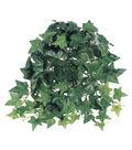 Sage Ivy Hanging Bush 12in X9 106l