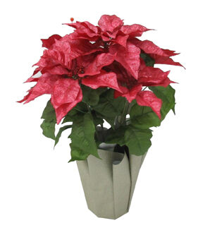 blooming holiday christmas poinsettia in potmetallic red