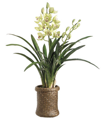 Bloom Room Luxe 29'' Cymbidium Orchid Plant In Basket-Green