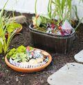 Meaghan\u0027s Kid Magical Gardens