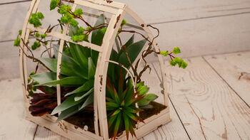 How-To: Bloom Room Metal Steeple Succulent Garden