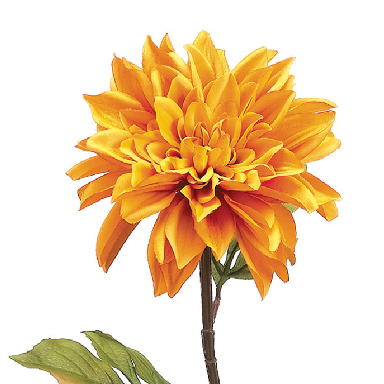 Shop by Flower, Dahlias.