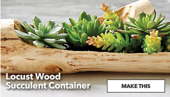 How To Make A Locust Wood Succulant Container. Make This.