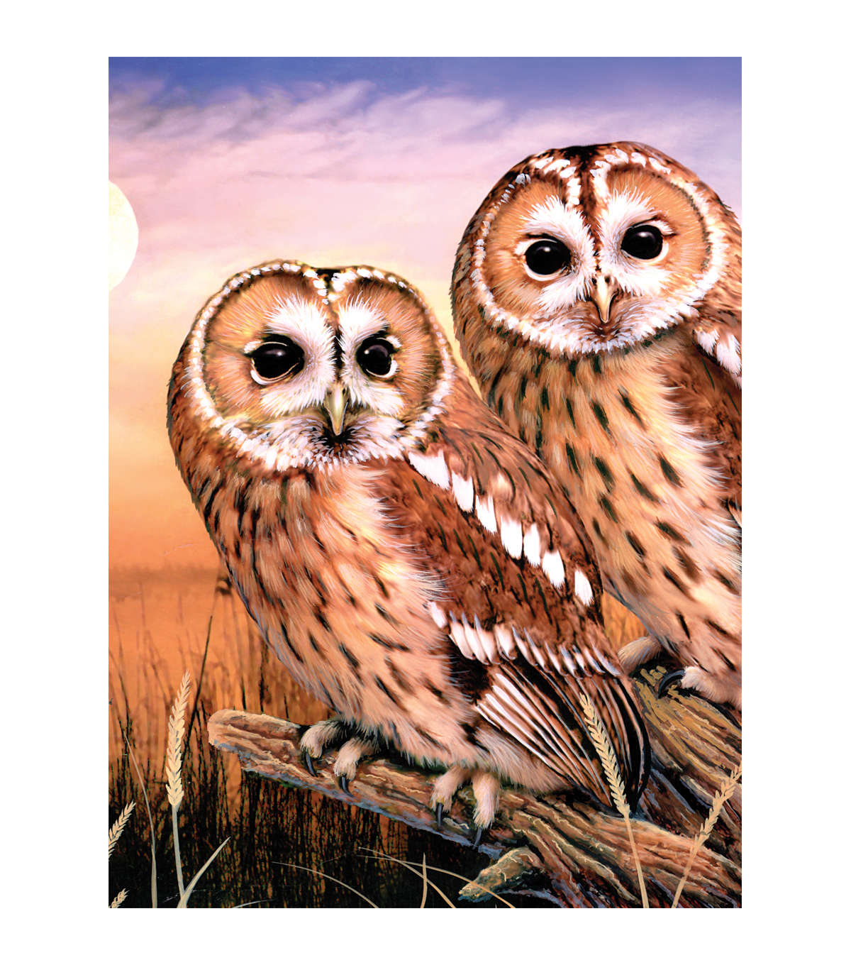 Royal Langnickel Tawny Owls Junior Small Paint By Number Kit
