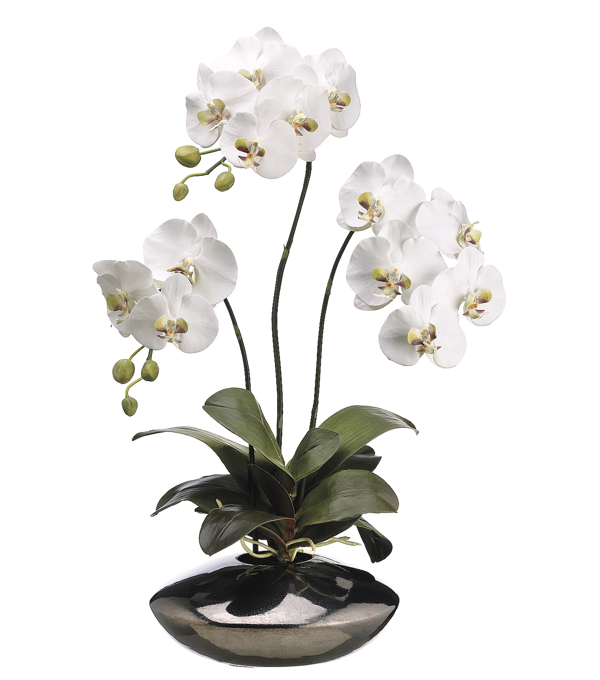 Bloom Room Luxe 31\u0027\u0027 Phalaenopsis Orchid Plant In Ceramic Pot-White