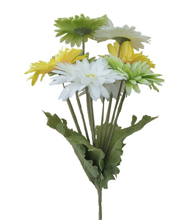 Blooming Spring 17\u0027\u0027 Gerbera Daisy Bush-Yellow, Green & White
