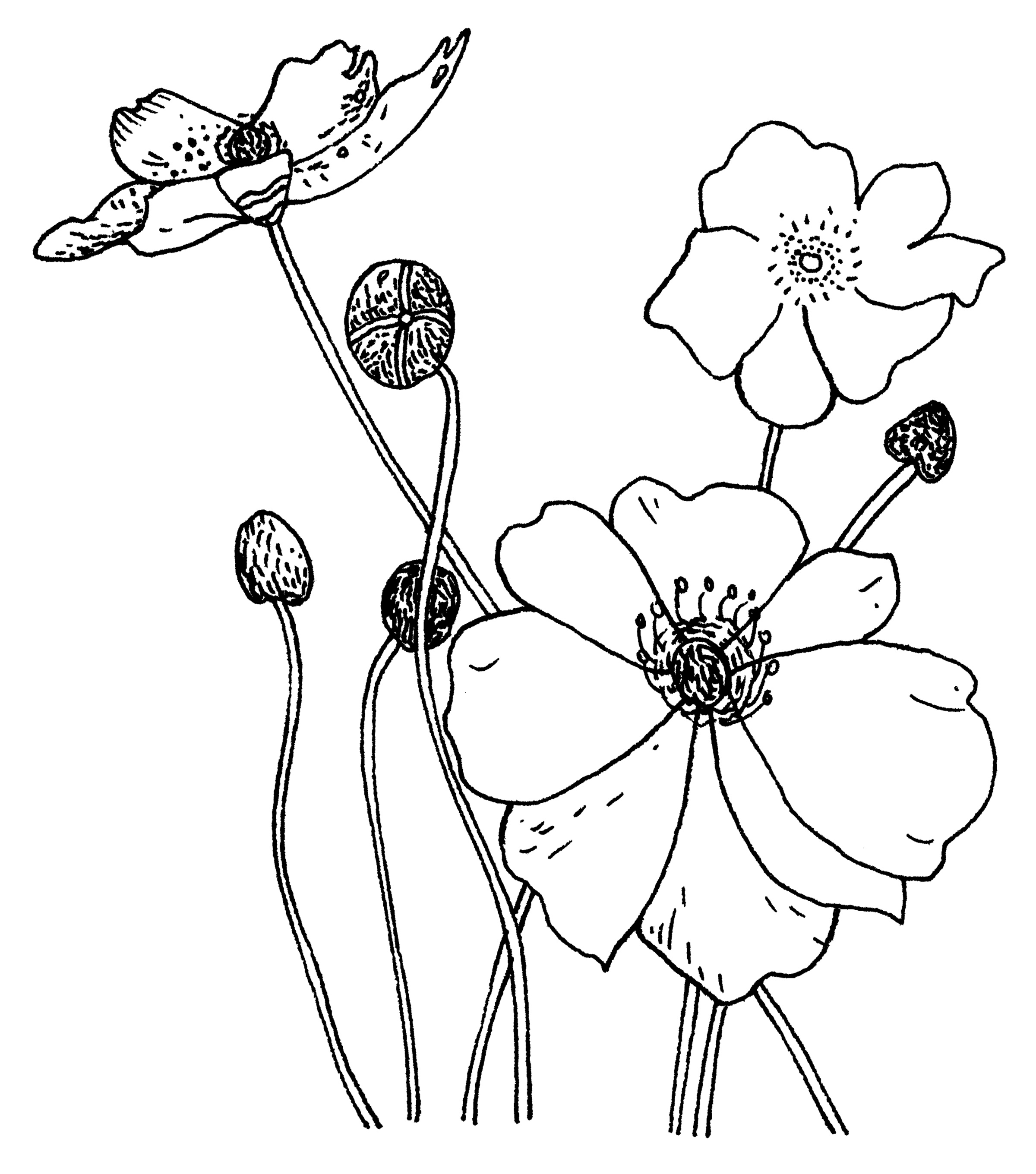 Penny Black Rubber Stamp 2.25\u0022X2.75-Poppies
