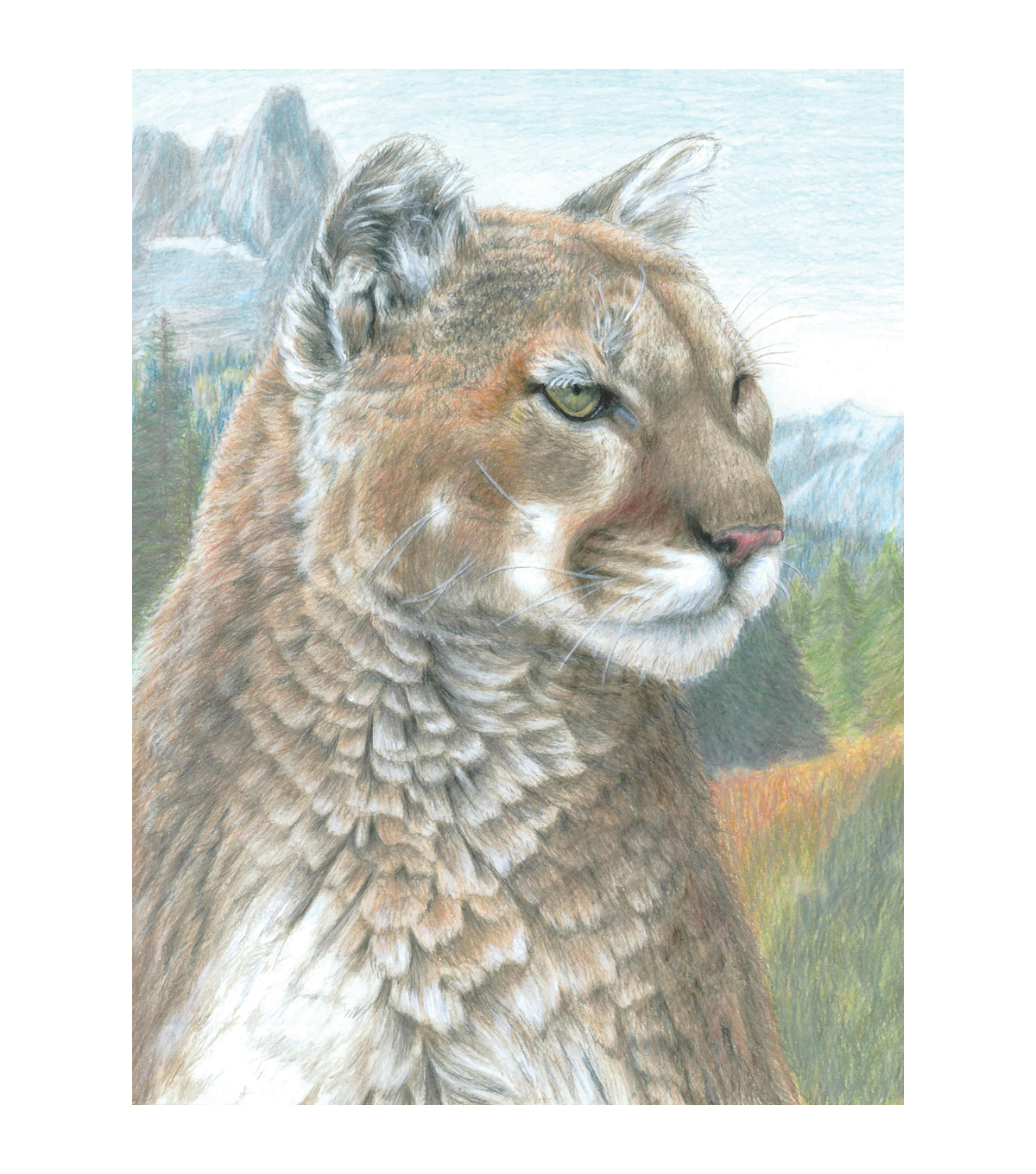 Royal Langnickel Cougar Color Pencil By Number Kit