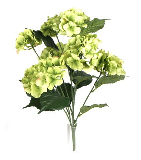 Bloom Room 22\u0027\u0027 Hydrangea Bush-Green