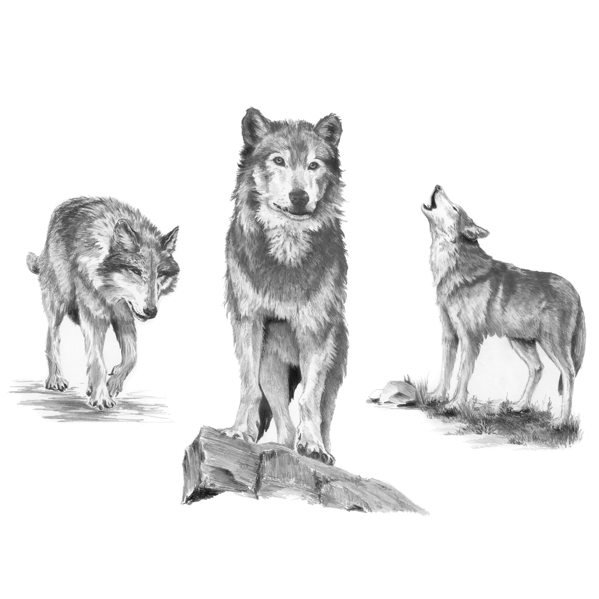 Royal & Langnickel Sketching Made Easy Large Kit Wolves
