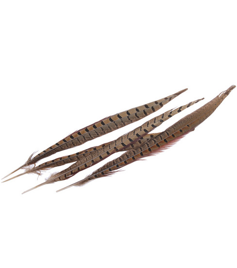 Midwest Design Ringneck Pheasant Feathers-4PK/Natural