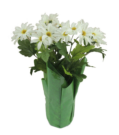 Blooming Spring 12\u0027\u0027 Potted Daisy-White