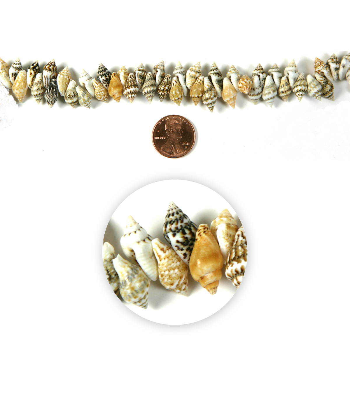 Blue Moon Strung Natural Shell Beads,Conch,Natural White & Brown