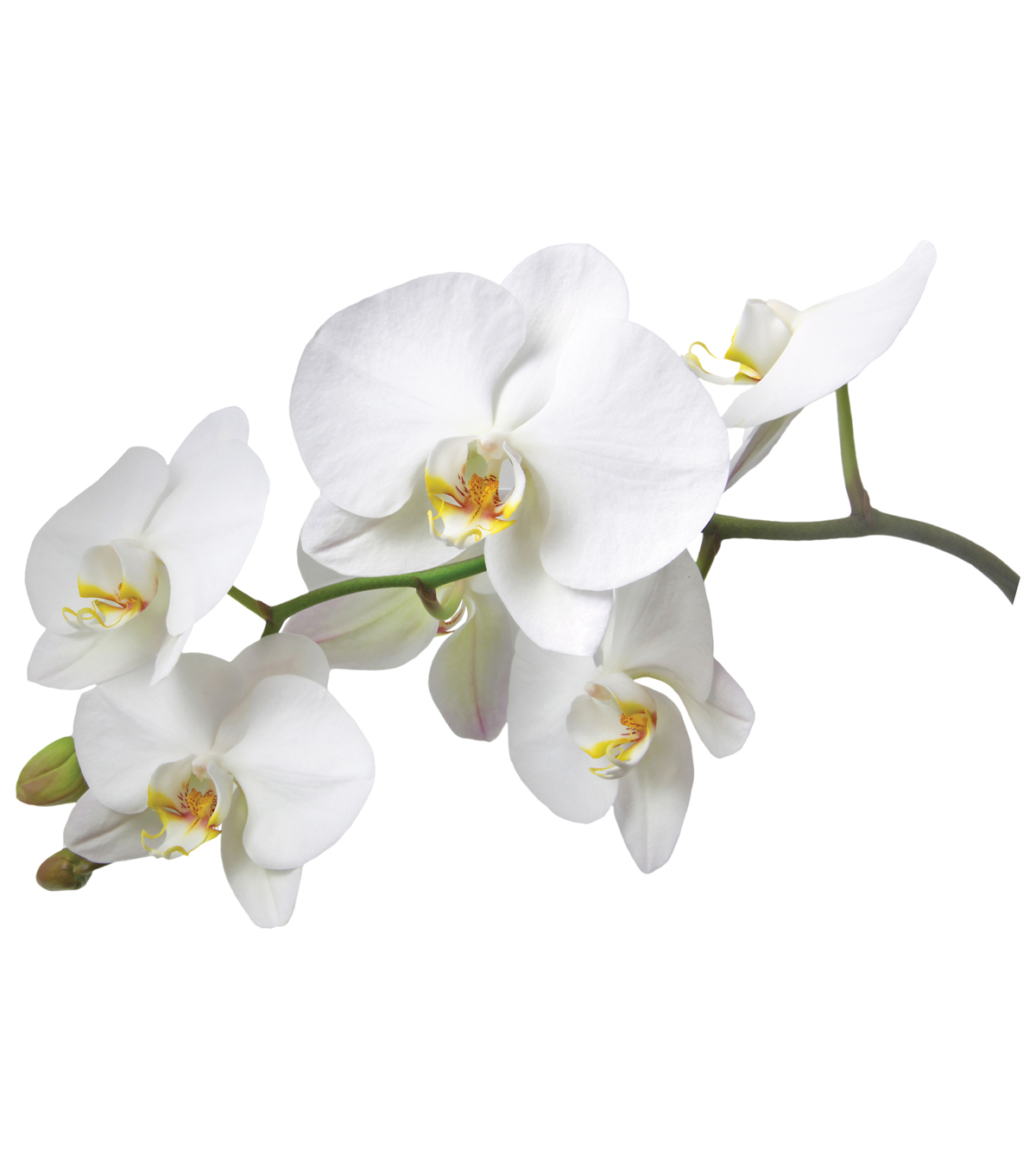 Home Decor White Orchid Wall Decal, 27.6\u0022 x 39.4\u0022