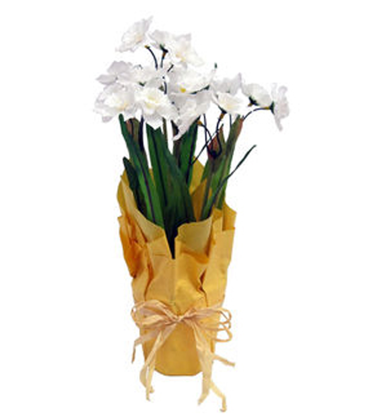 Blooming Spring Daffodil In Pot-White & Yellow