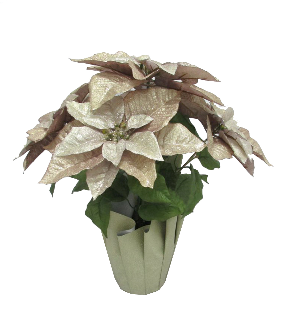 Blooming Holiday Potted Poinsettia-Gold