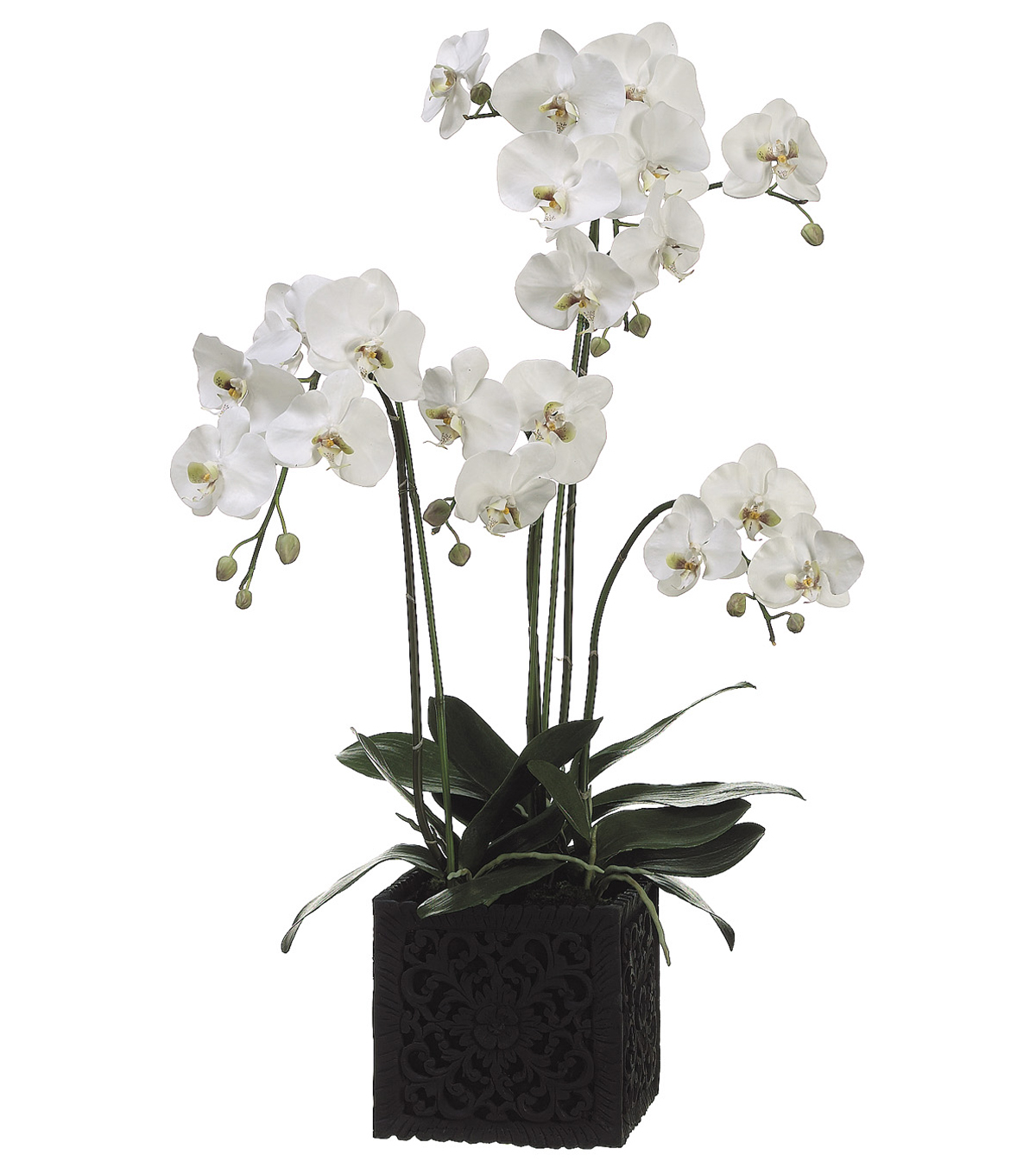 Bloom Room Luxe 37\u0027\u0027 Orchid Plant In Polyresin Container-Green