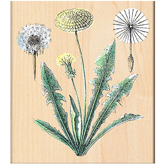 Penny Black Mounted Rubber Stamp Dandelions