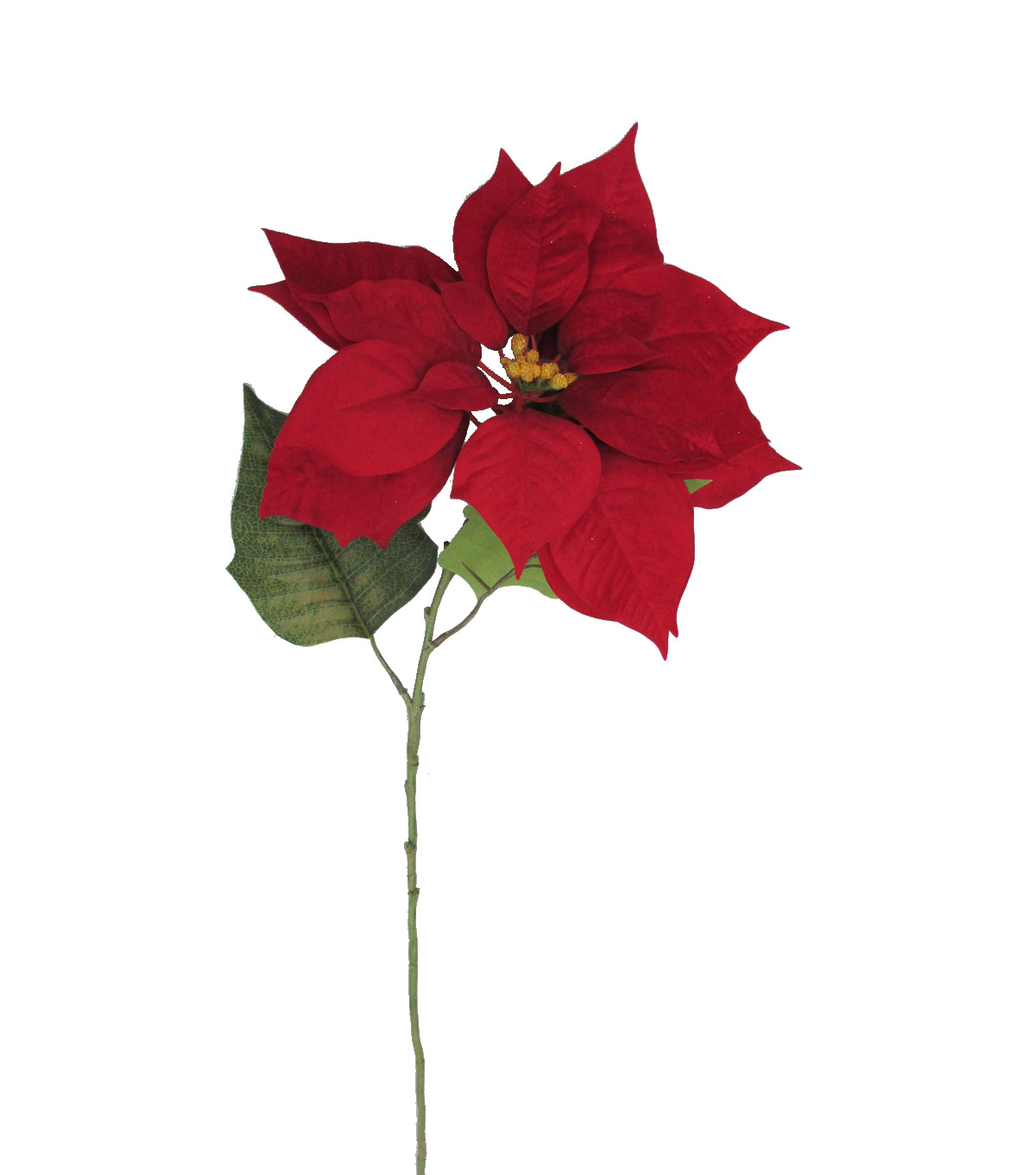 Blooming Holiday 28\u0027\u0027 Poinsettia Stem-Red