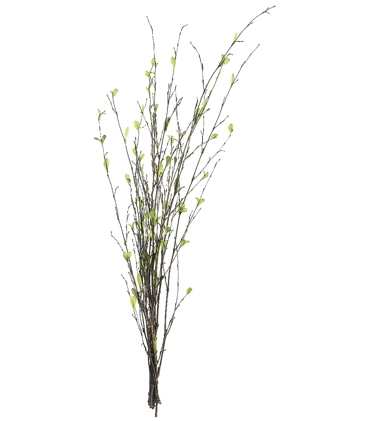 Bloom Room 26\u0022 Bamboo Branch x7-Green
