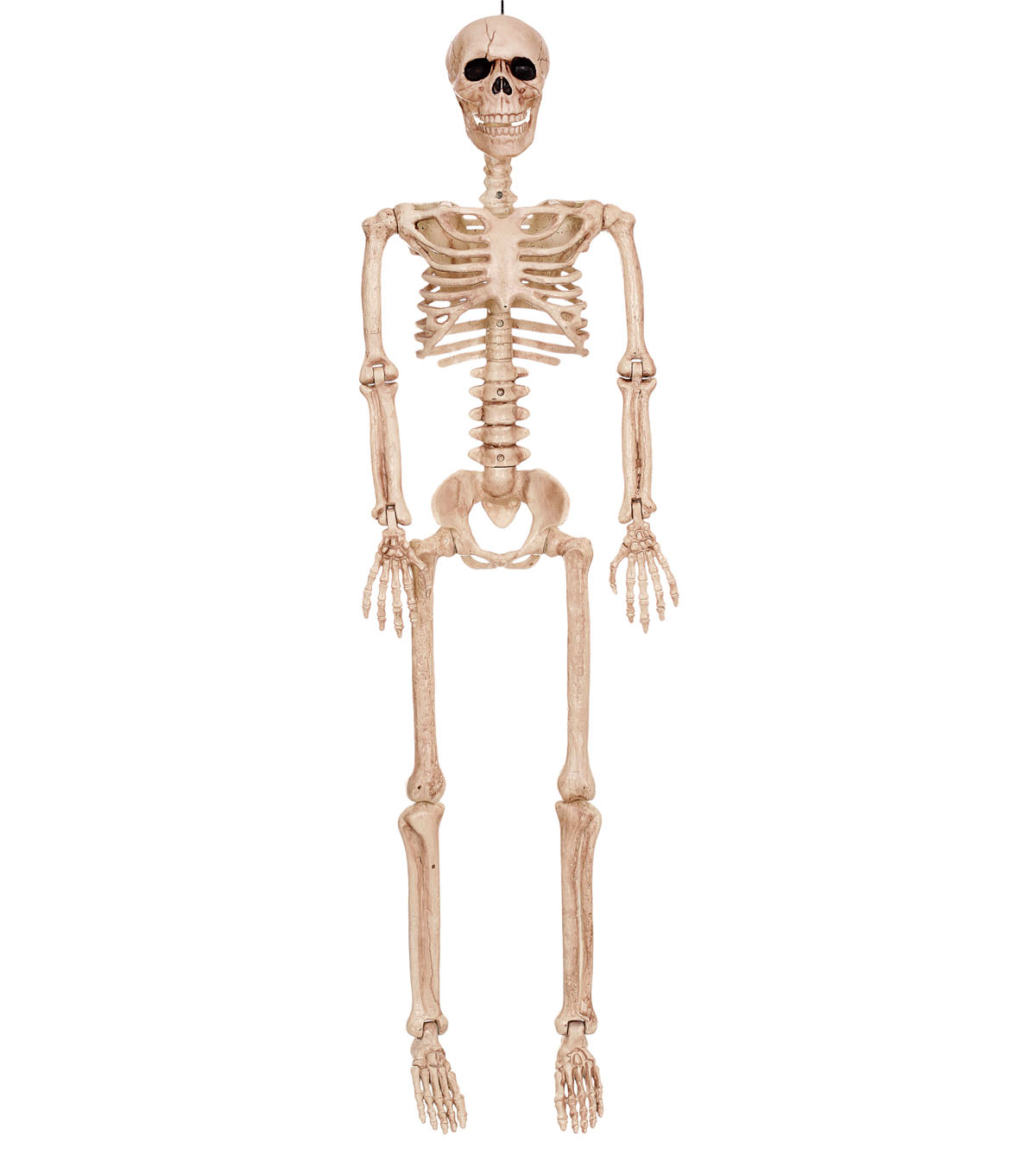 The Boneyard Halloween 36\u0027\u0027 Posable Skeleton
