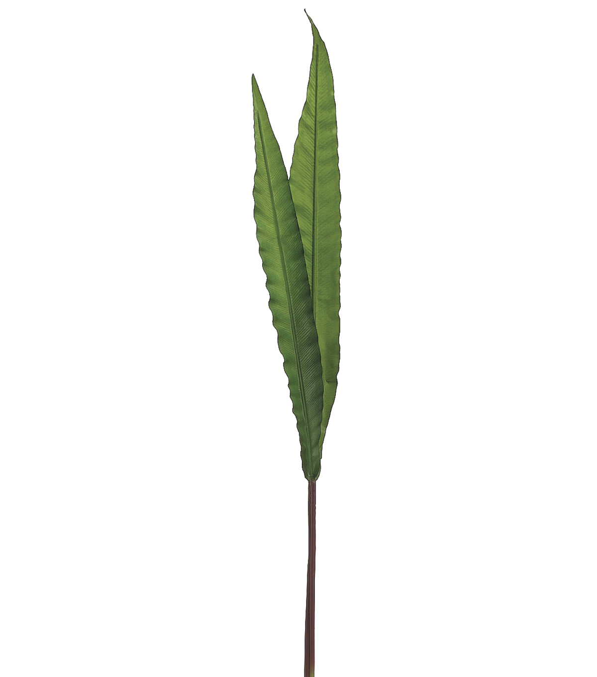 Bloom Room 32\u0022 Asplenium Fern Leaf-Green