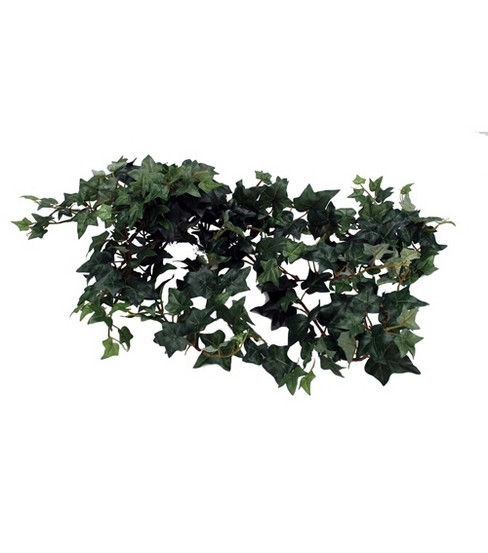 31\u0022 Needle Point Ivy Bush with 300 Lvs. Green