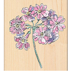 Penny Black Mounted Rubber Stamp Auriculas