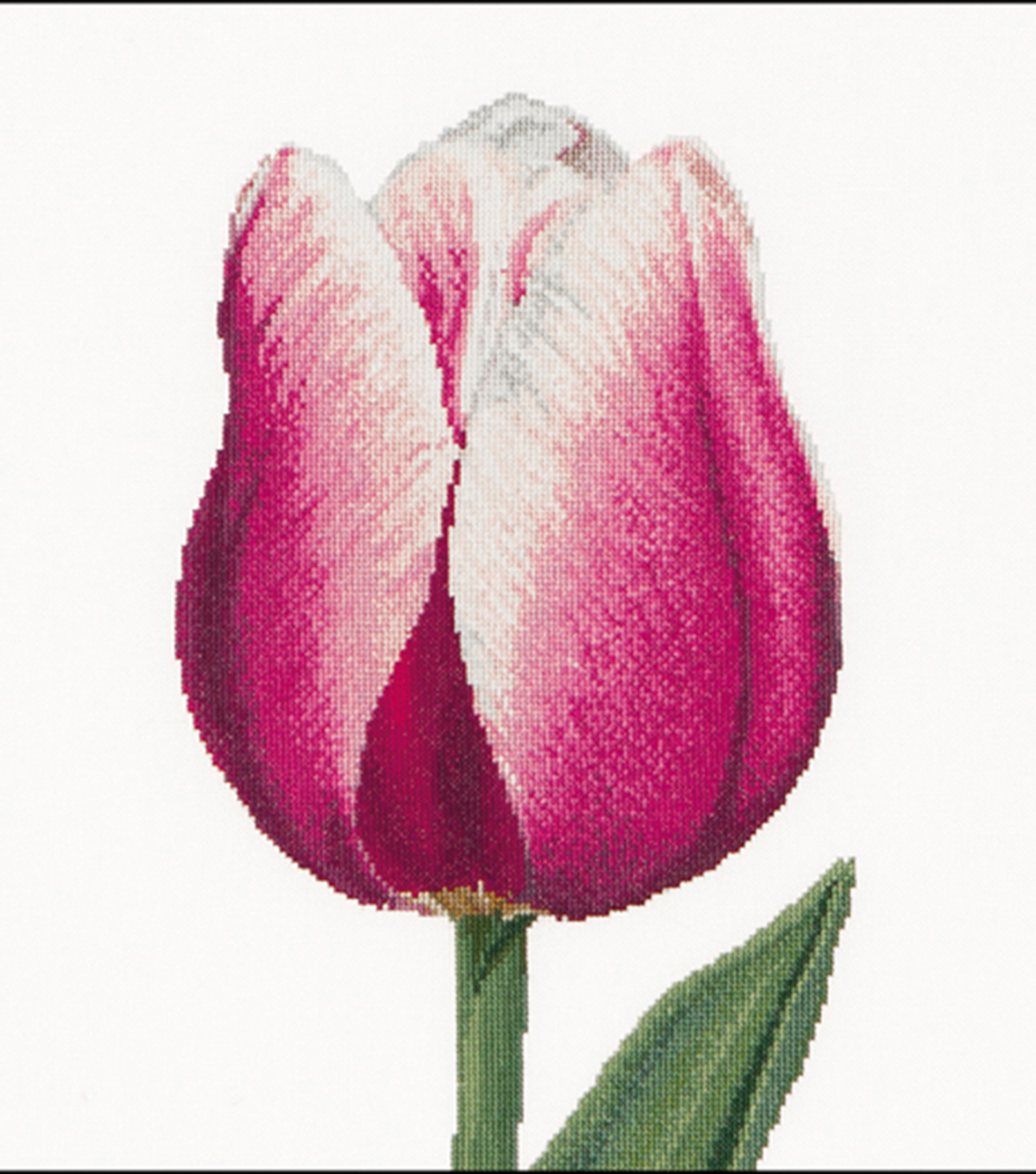 Red & White Triumph Tulip On Aida Counted Cross Stitch Kit