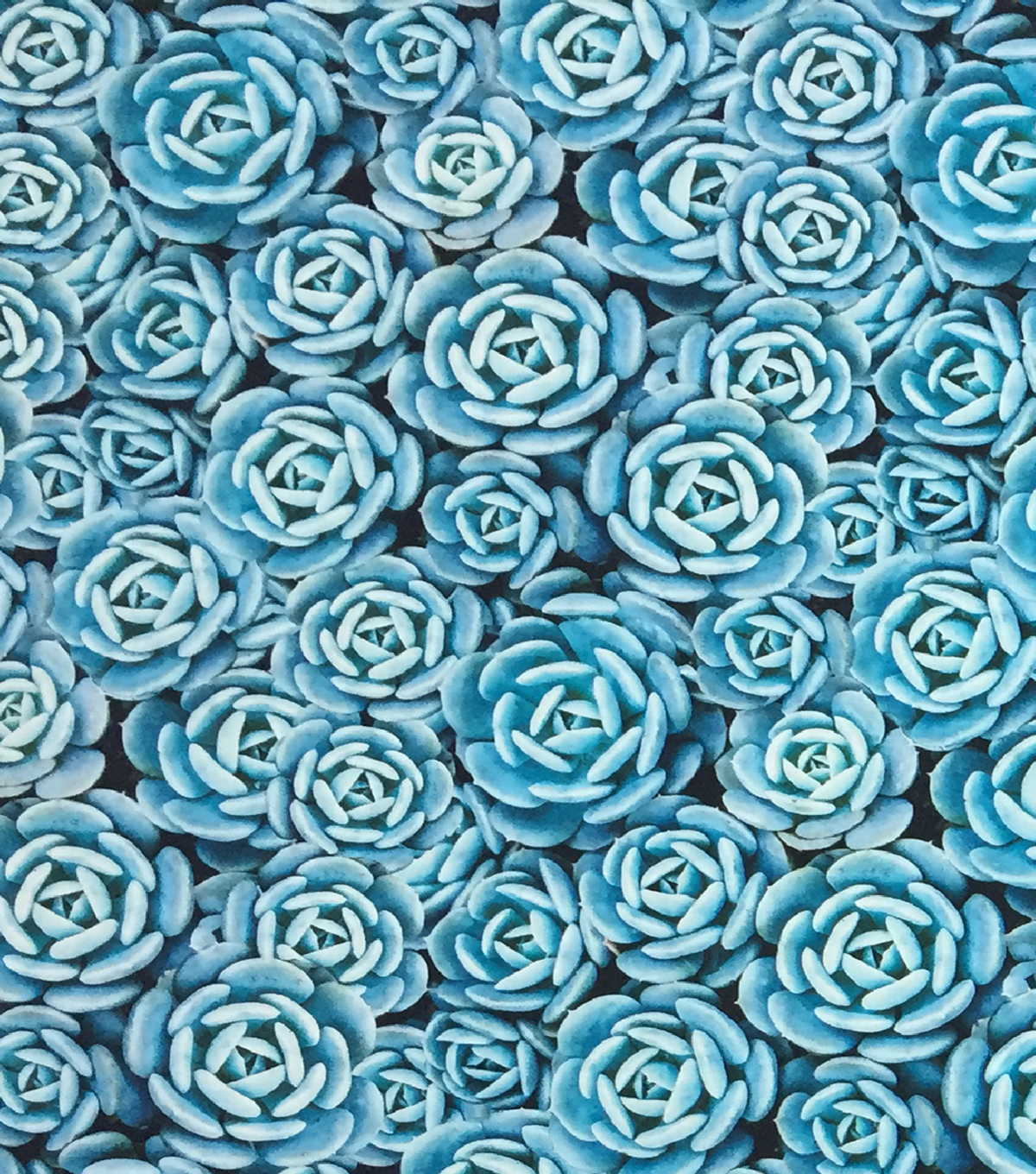 "Novelty Cotton Photo Real Fabric 44""-Succulent"
