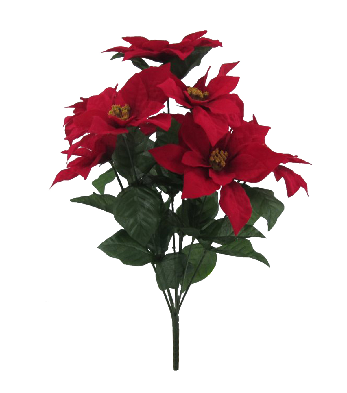 Blooming Holiday Poinsettia Bush-Red