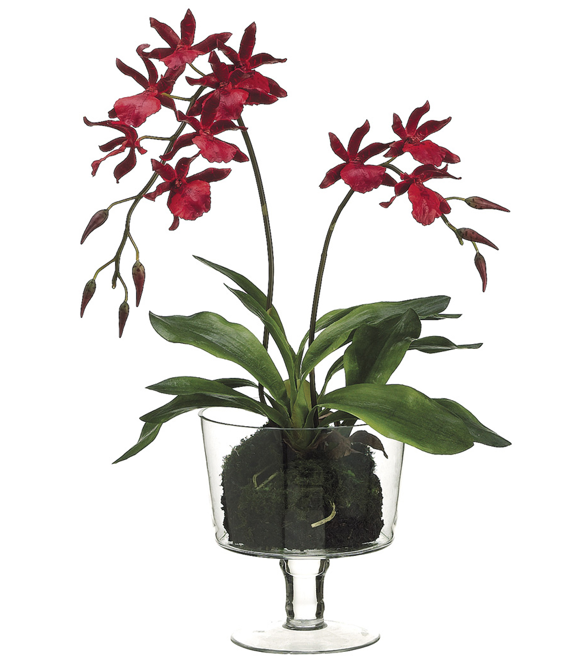 Bloom Room Luxe 26\u0027\u0027 Zygopetalum Orchid Plant In Glass Vase-Red
