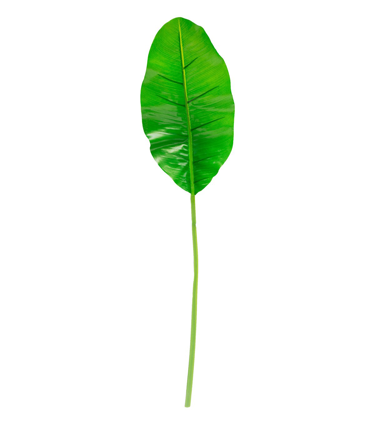 Fresh Picked Spring Large Banana Leaf-Green