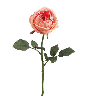 "Bloom Room 23"" Garden Cabbage Rose Stem-Two Tone Salmon"