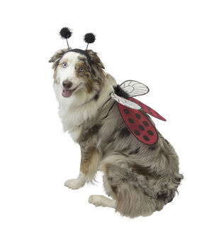 Maker's Halloween Pet Accessory-Set Ladybug Large/X-Large
