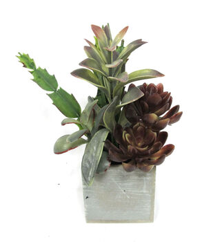 Bloom Room 9'' Succulent Mix In Square Wooden Box
